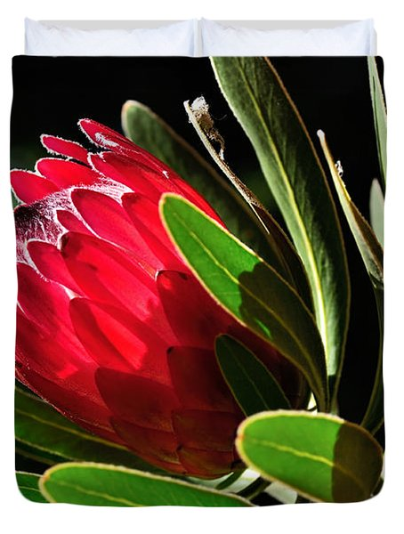 Sun-filled Protea Duvet Cover by Kaye Menner
