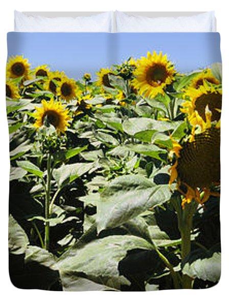 Sunflower Field, California, Usa Duvet Cover