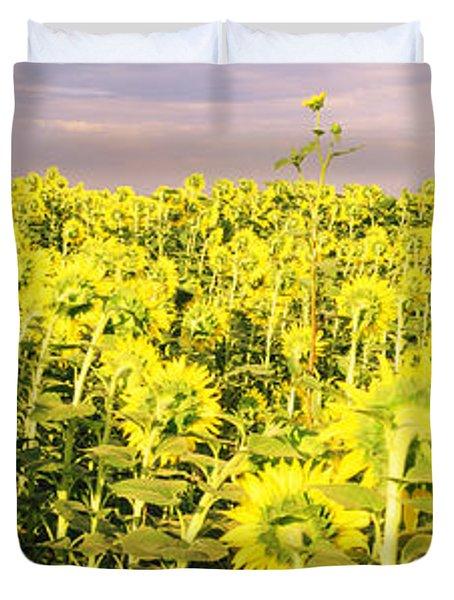 Sunflower Field, Colorado, Usa Duvet Cover