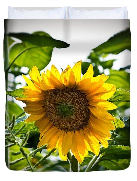 Sunflower Vignette Edges Duvet Cover
