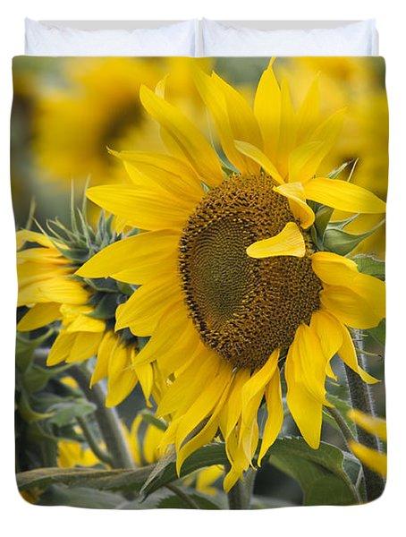Sunflowers - D008561 Duvet Cover