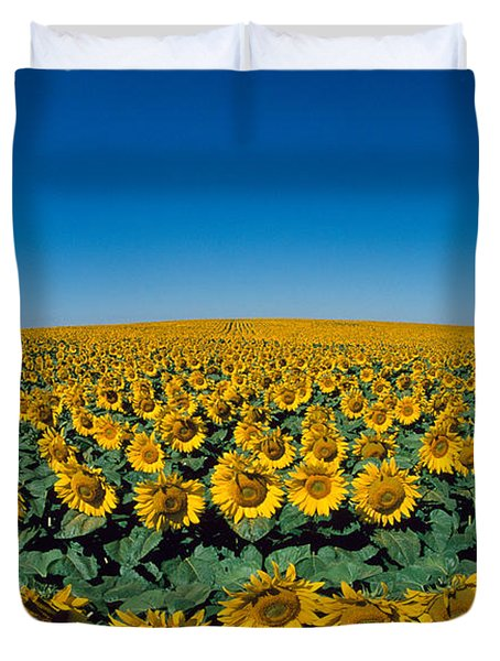 Sunflowers Helianthus Annuus In A Field Duvet Cover