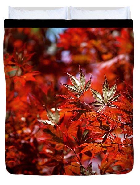 Sunlit Japanese Maple Duvet Cover by Rona Black