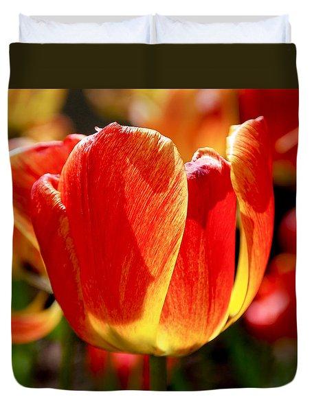 Sunlit Tulips Duvet Cover by Rona Black