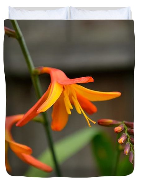 Duvet Cover featuring the photograph Sunny Crocosmia by Scott Lyons