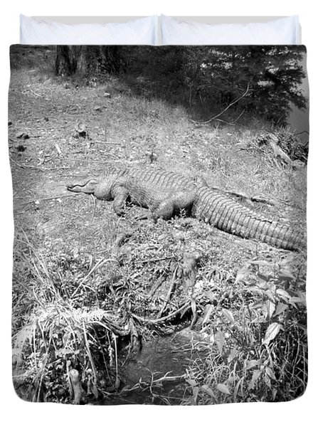 Duvet Cover featuring the photograph Sunny Gator Black And White by Joseph Baril