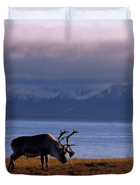 Svalbard Reindeer Grazing Near The Sea Duvet Cover