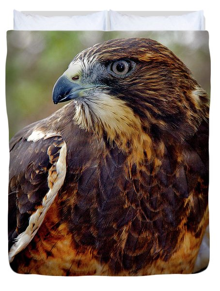 Swainson's Hawk Duvet Cover by Ed  Riche