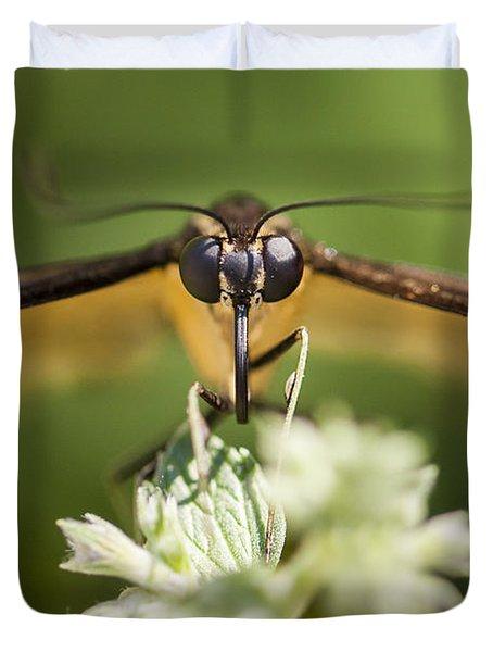 Swallowtail Butterfly Duvet Cover by Adam Romanowicz