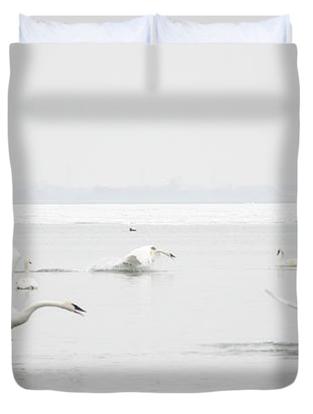 Swan Fight Duvet Cover