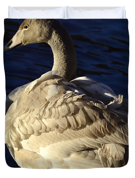 Swan Sits And Looks Out Over The Lake Duvet Cover by Tommytechno Sweden