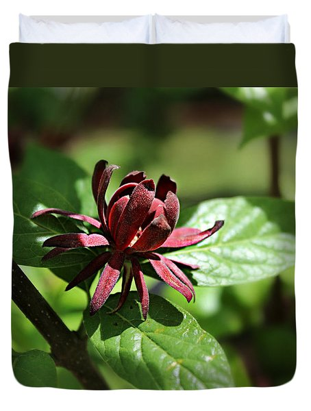 Sweet Shrub Duvet Cover