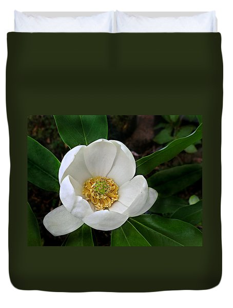 Sweetbay Magnolia Duvet Cover by William Tanneberger