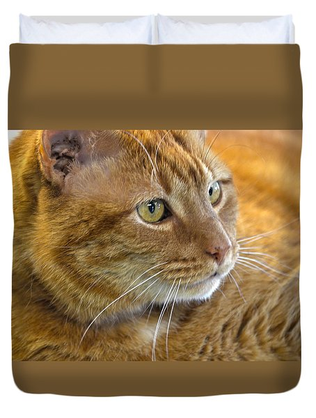 Tabby Cat Portrait Duvet Cover by Sandi OReilly