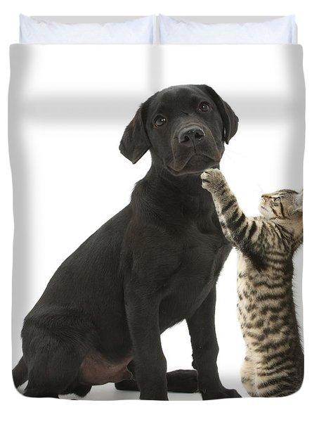 Tabby Male Kitten & Black Labrador Duvet Cover by Mark Taylor