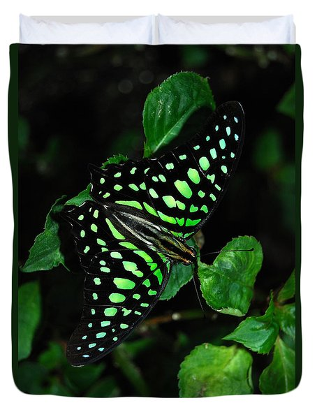 Tailed Jay Butterfly Duvet Cover by Eva Kaufman