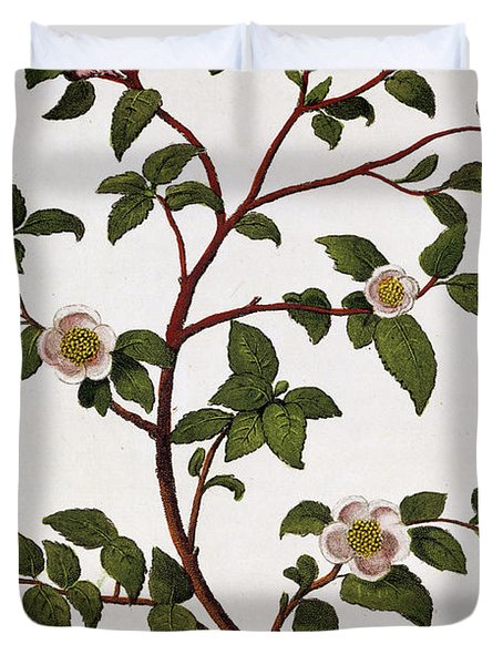 Tea Branch Of Camellia Sinensis Duvet Cover by Anonymous