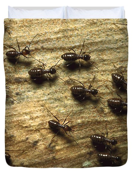 Termites On Wood With One Carrying Duvet Cover by Konrad Wothe