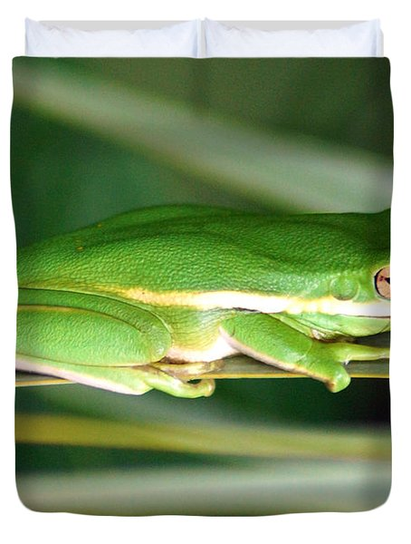 The American Green Tree Frog Duvet Cover by Kim Pate