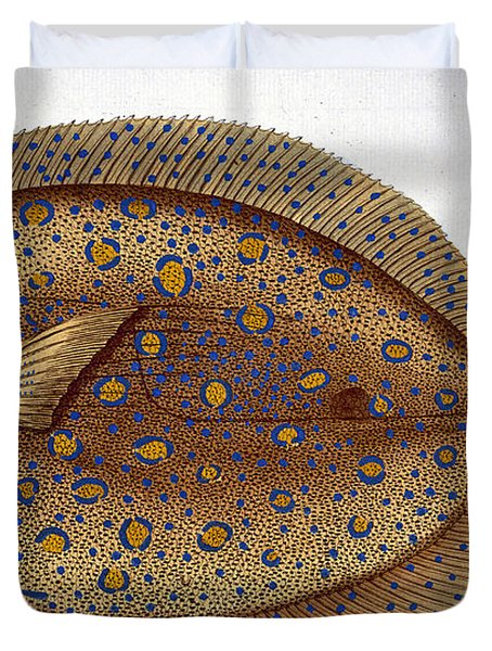 The Argus Flounder Duvet Cover by Andreas Ludwig Kruger