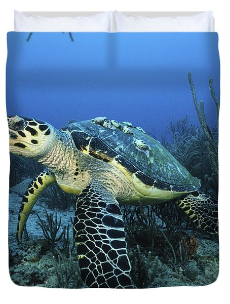 The Beauty Hawksbill Duvet Cover