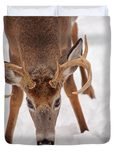 The Buck Stare Duvet Cover by Karol Livote
