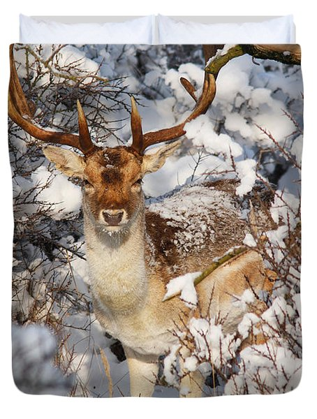 The Christmas Deer - Fallow Deer In The Snow Duvet Cover