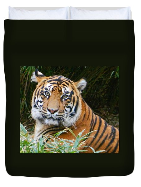 The Eyes Of A Sumatran Tiger Duvet Cover by Emmy Marie Vickers