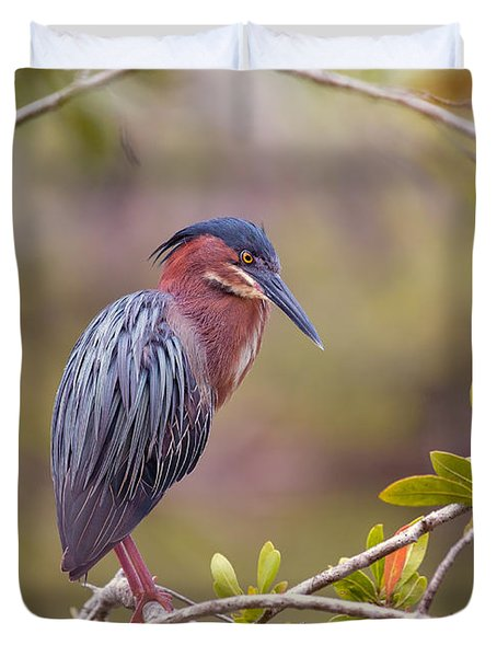 The Green Heron At Blue Hole Duvet Cover