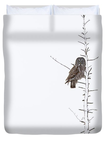 The Grey Hunter On White Duvet Cover by Mircea Costina Photography