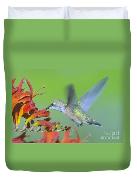 The Humming Bird Sips  Duvet Cover by Jeff Swan