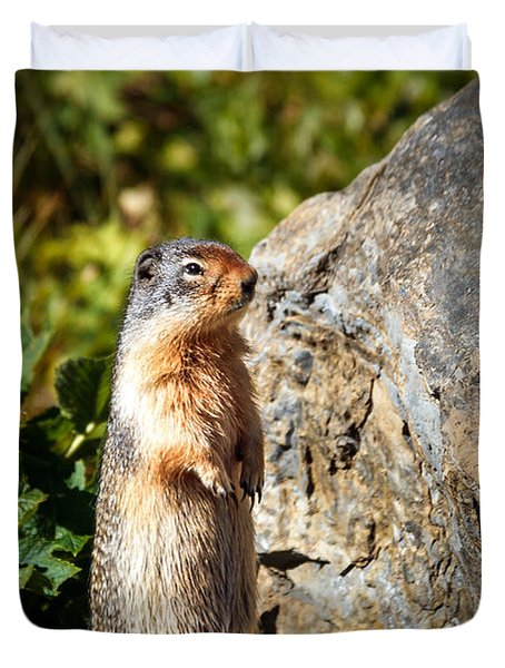 The Marmot Duvet Cover