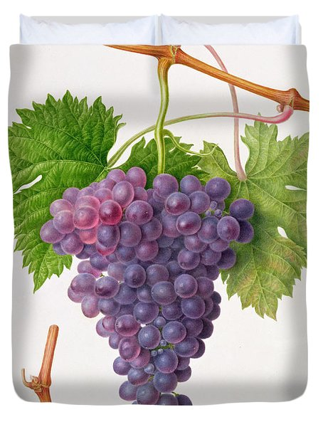 The Poonah Grape Duvet Cover by William Hooker