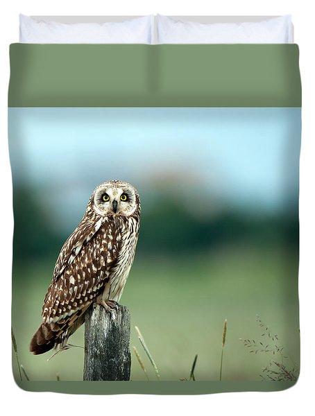 The Short-eared Owl  Duvet Cover