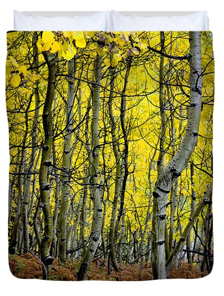 Duvet Cover featuring the photograph Through The Aspen Forest by Ellen Heaverlo