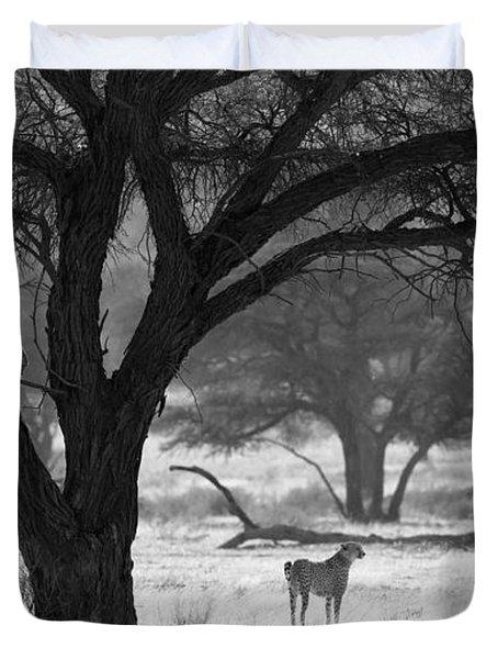 Three Cheetahs Duvet Cover by Max Waugh