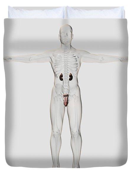 Three Dimensional Medical Illustration Duvet Cover by Stocktrek Images