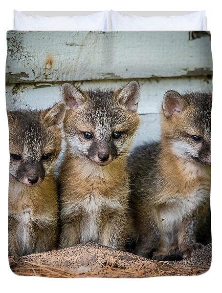 Three Fox Kits Duvet Cover by Paul Freidlund