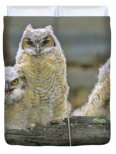 Three Great-horned Owl Chicks Duvet Cover
