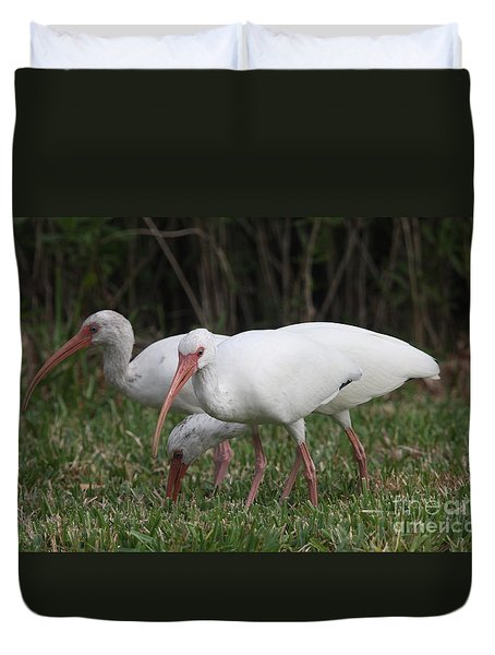 Three Ibis Together Duvet Cover by Christiane Schulze Art And Photography
