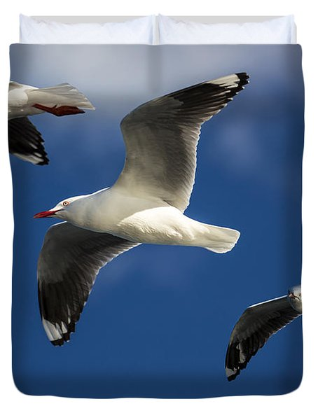 Three Silver Gulls In Flight Duvet Cover by Avalon Fine Art Photography