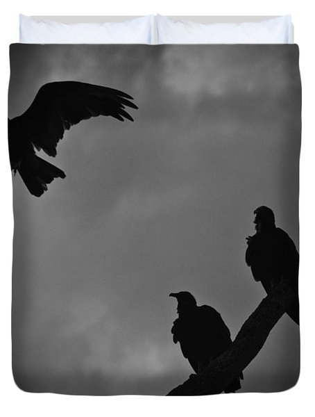 Three Vultures Duvet Cover by Bradley R Youngberg