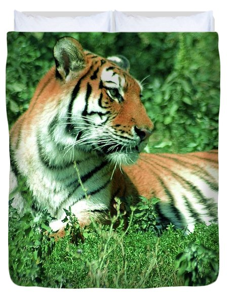 Tiger Duvet Cover by Kathleen Struckle