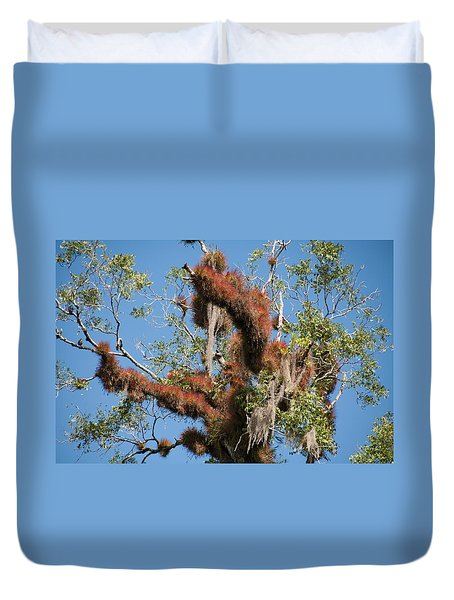 Tikal Furry Tree Closeup Duvet Cover