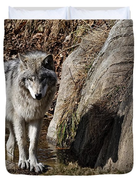 Duvet Cover featuring the photograph Timber Wolf In Pond by Wolves Only