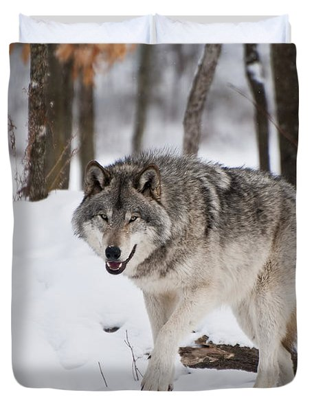 Duvet Cover featuring the photograph Timber Wolf In Winter Forest by Wolves Only