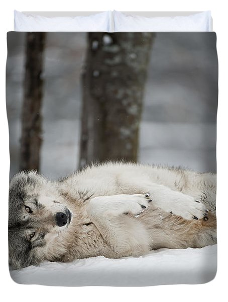 Timber Wolf In Winter Duvet Cover by Wolves Only