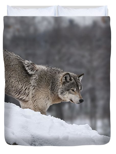 Timber Wolf On Hill Duvet Cover by Wolves Only