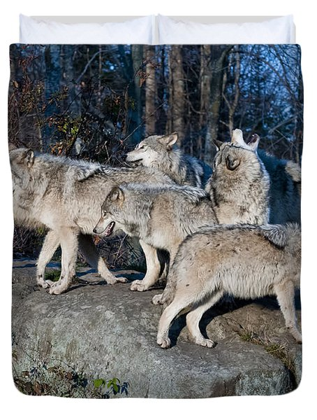 Timber Wolf Pack Duvet Cover by Wolves Only