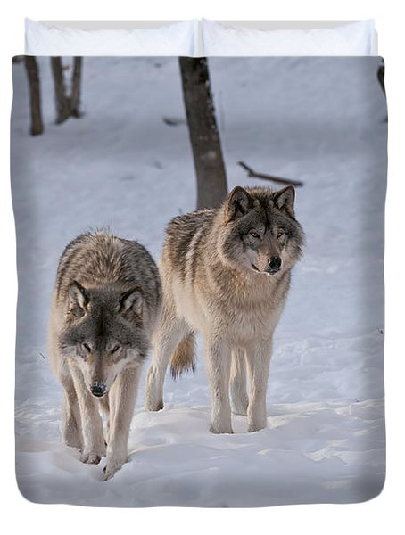 Duvet Cover featuring the photograph Timber Wolf Pair  by Wolves Only